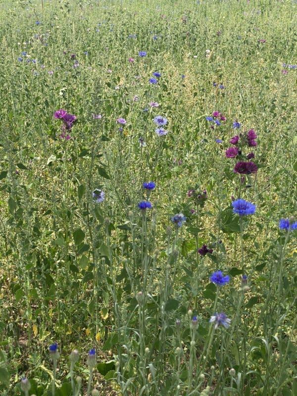 Insektenland Langenzenn