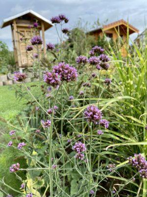 Eisenkraut im Insektenland