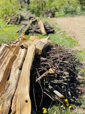 Totholzhaufen im Insektenland