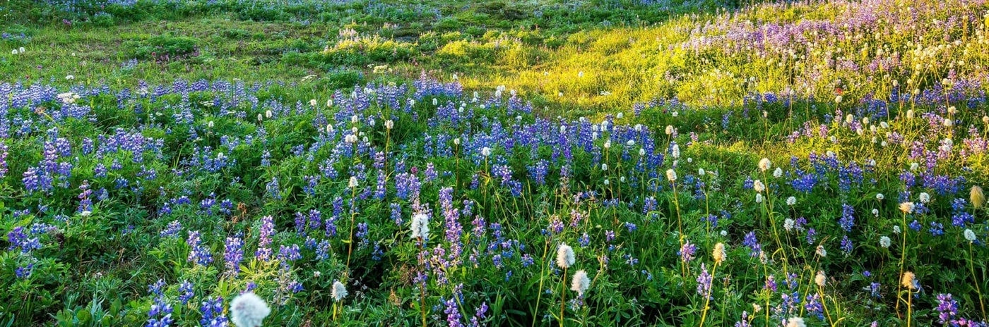 Blühkalender einheimische Pflanzen