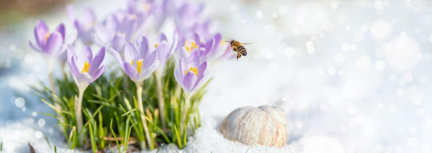 Wildbienen Nahrung im Frühjahr