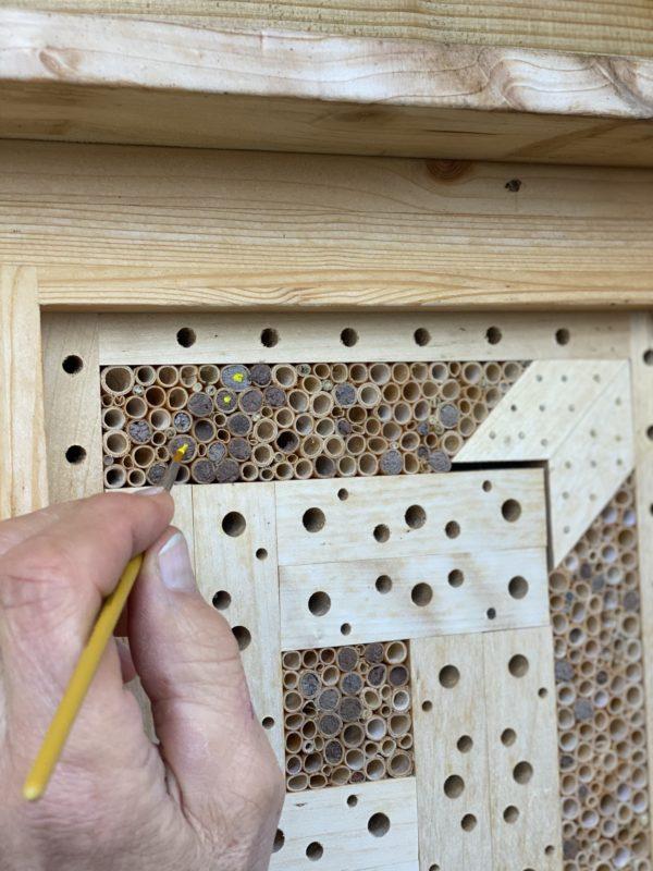 Wildbienennisthilfe mit Markierung der Nistgänge