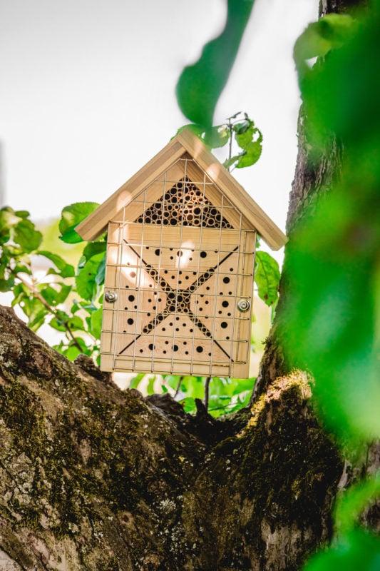 BienenLiebe im Baum